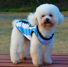 aa4324170 Soccer World Cup Football Argentina Pet Vest Summer Football Team Dog  Clothes Vest Buy Puppies