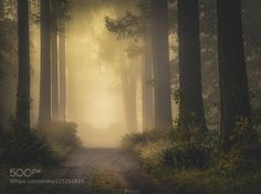 Misty Autumn Road II by LauriLohi #landscape #travel