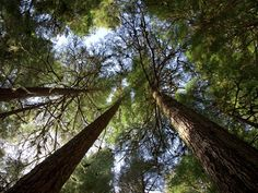Visit the World's Most Amazing Old-Growth Forests   Travel   Smithsonian
