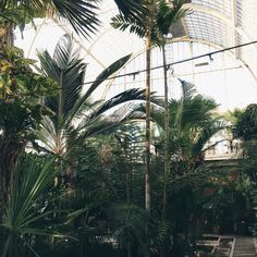 The Palm House in the Garden Society of Gothenburg is magnificent. Built in the late 19th century, it has been a local favourite ever since. #thisisgbg #gothenburg