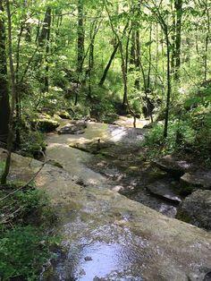 Best Hiking Near Nashville TN | Cheeks Bend Trail in Columbia, TN
