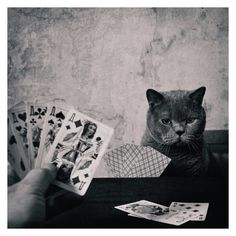 kitties would probably have pretty killer poker faces