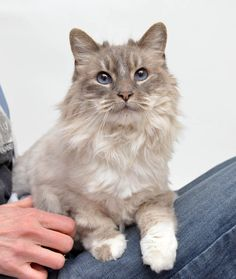 Adopted! Kitty has found her forever home. 2/24/15