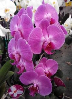 letošní orchideje (70 pieces) Jigsaw Puzzles, Plants, Puzzle Games, Plant, Puzzles, Planets