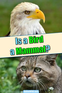 We answer this question by looking at the similarities & differences between birds & mammals. Are birds mammals? Animal Facts For Kids, Similarities And Differences, Mammals, Fun Facts, Birds, Pictures, Photos, Bird, Funny Facts