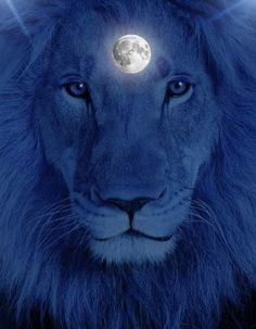 Daily I run with the wolves, they have no business with me when they think I am a Lion. <3
