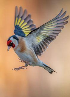 Most Beautiful Birds, Pretty Birds, Cardinal Bird House, Baby Animals, Cute Animals, Backyard Birds, Bird Pictures, Colorful Birds, Bird Art