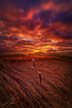 i know that we can make it you and me ... phil-koch