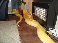 serpientes pequeñas