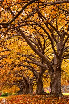 ~~Autumn Gold by justinderosa~~