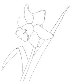 how to draw a daffodil