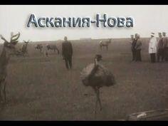 Аскания Нова - 1937. Научно-документальный фильм о биосферном заповедник...