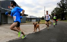 We can't help smiling at the thought of this pup running in a marathon. So cute.