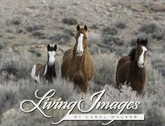 Wild Horses in the Sand Wash Herd Area in Wyoming