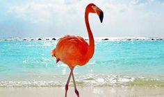 4 Unforgettable Wildlife Adventures in the Caribbean Old Florida, Puerto Rico, Caribbean, Destinations, Wildlife, Articles, Birds, Adventure, Bird