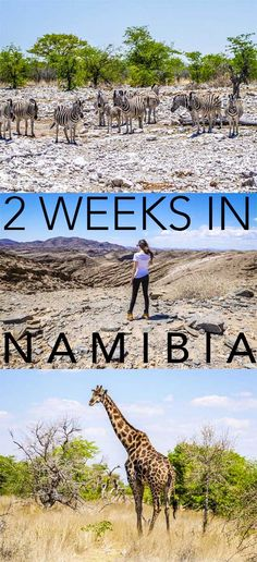 Self-Drive Namibia Itinerary: Road Trip The Best Places to Visit in Namibia Cool Places To Visit, Places To Travel, Places To Go, Safari, Road Trip, Africa Destinations, Les Continents, Jamaica Travel, Self Driving
