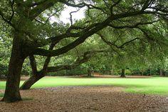 Elizabethan Garden ~ Roanoke, Is. by TaniaGail, via Flickr