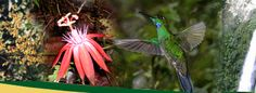 Costa Rica Orchids, Flowers, and Hummingbirds at Bosque de Paz Private Nature Reserve - a photographers dream