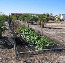 Las Vegas Gardening