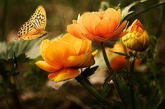 A nice butterfly near flowers Orange Flowers, Floral Flowers, Diy Flowers, Orange Butterfly, Blooming Flowers, Flower Diy, Send Flowers, Butterfly Wall, Flowers Nature