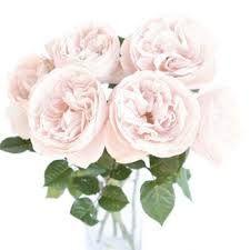 Image result for rose white blush