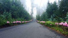 Madeira Islands Eucaliptus forest
