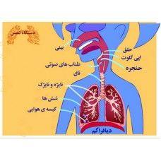 تبادل با محیط (1)   بسته ی مربوط به فصل تبادل با محیط  کتاب علوم سال اول متوسطه 1 (هفتم)   می باشد که به یادگیری دانش آموزان در زمینه ی موضوعاتی چون: اجزاء دستگاه تنفس، کیسه های هوایی، کلیه ها، ساختمان یک نفرون، تصفیه خون -دستگاه دفع ادرار، ساختار دستگاه تنفس کمک می کند. - See more at: http://www.lrnshop.com/index.php?route=product/product&path=62_147_152&product_id=388#sthash.drwOthek.dpuf