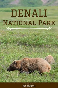 Denali National Park | Go North - Mortons On The Move Dog Runs, Park Service, Alaska, National Parks, Privacy Policy, Dog Playground, State Parks