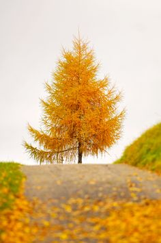 Don't know what type tree....but it is beautiful