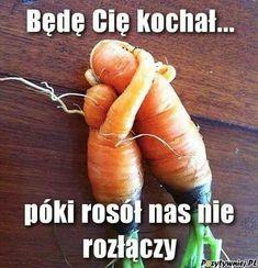 Wtf Funny, Funny Jokes, Laugh Or Die, Polish Memes, Funny Mems, Nyan Cat, Sarcastic Humor, Good Mood, Best Memes