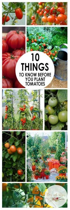 10 Things to Know Before You Plant Tomatoes Planting Tomatoes Tomato Growing Tips and Tricks Vegetable Gardening Tricks How to Grow Tomatoes Easy Gardening Tips Growing T. Growing Tomatoes Indoors, Growing Tomatoes In Containers, Growing Vegetables, Grow Tomatoes, Growing Plants, Garden Tomatoes, Vegetable Garden For Beginners, Gardening For Beginners, Vegetable Ideas