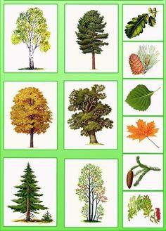 Autumn Activities For Kids, Math For Kids, Science For Kids, Science Activities, Science And Nature, Teaching Plants, Teaching Kids, Montessori Kindergarten, Tree Study