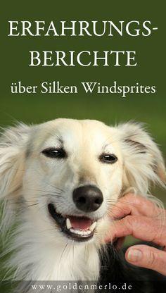 Airedale Terrier, Rottweiler, Silken Windhound, Good Fellows, Alaskan Malamute, Italian Greyhound, Tier, Australian Shepherd, Tricks