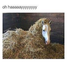 30 Animal Memes That Will Make You Laugh Until You Cry - Horses Funny - Funny Horse Meme - - 30 Animal Memes That Will Make You Laugh Until You Cry The post 30 Animal Memes That Will Make You Laugh Until You Cry appeared first on Gag Dad. Funny Horse Memes, Funny Horse Pictures, Funny Animal Jokes, Funny Horses, Cute Horses, Pretty Horses, Cute Funny Animals, Animal Memes, Cute Baby Animals