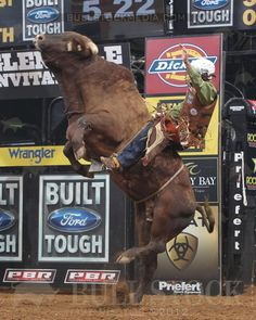 3..2..1.. LIFTOFF!!! These bulls are such incredible athletes!