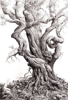 Old European beech tree in pen and ink Tree Drawings Pencil, Landscape Pencil Drawings, Cool Art Drawings, Ink Pen Drawings, Tree Story, Snake Art, Tree Sketches, Tinta China, Unique Trees