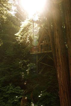 Sequoia Retreat Centerby (scissorina) | http://www.scissorina.com/