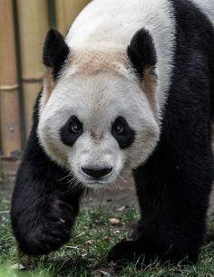 panda | Asset Panda  Brian Volpe's work