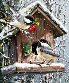Snow-Birds | Dona Gelsinger