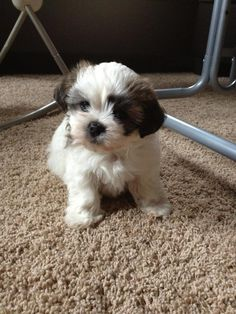 I want this dog when I get older!