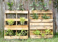 The humble pallet. Vertical garden, urban gardening, vertical gardening, pallet, pallet garden, pallet gardening