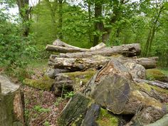 Log Pile with Mushrooms. Beecraigs Country Park