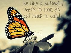 My Favorite Quote. So true, never settle for anything. Be like a butterfly, pretty to look at , but hard to catch . You Give Me Butterflies, Butterfly Quotes, Butterfly Drawing, She Quotes, Monarch Butterfly, Self Love, Besties, Favorite Quotes, That Look