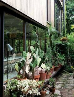 Glass & wood cladding, with a cactus garden | Contemporary Architecture | Buenos Aires