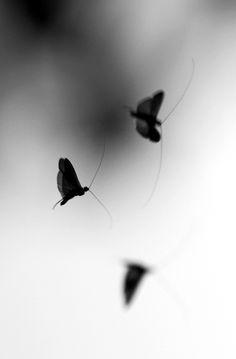 'Butterflies are self-propelled flowers', RH Heinlein (Photo by Demiman)