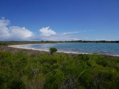 Lake Thetis, Cervantes, Australia - a truly remarkable place with some very interesting biology and ecology going on. Winter Day, Western Australia, Ecology, Perth, To Go, Water, Places, Outdoor, Water Water