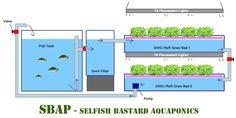 Selfish Basterd Aquaponics -SBAP - AQUAPONICS SYSTEMS - Aquaponics Nation