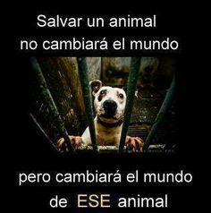Stop Animal Abuse. Save Animals, Animals And Pets, Funny Animals, Funny Pets, Love Pet, I Love Dogs, Puppy Love, Amor Animal, Mundo Animal