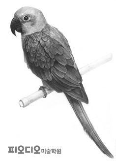 55 Animals With Wings Pencil Drawing Ideas - Art Bird Pencil Drawing, Realistic Pencil Drawings, Object Drawing, Graphite Drawings, Pencil Art Drawings, Bird Drawings, Animal Drawings, Art Sketches, Simple Car Drawing