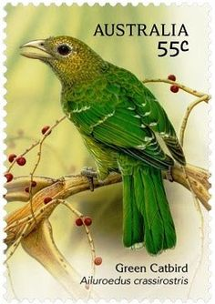 Australia. Green Catbird (Ailuroedus crassirostris) is a species of bowerbird found in subtropical forests along the east coast of Australia, from southeastern Queensland to southern New South Wales